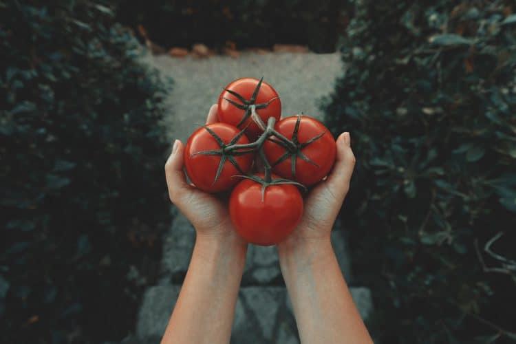 トマト4つ